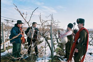 Bulgarians play their bagpipes to facilitate the growth of their wines