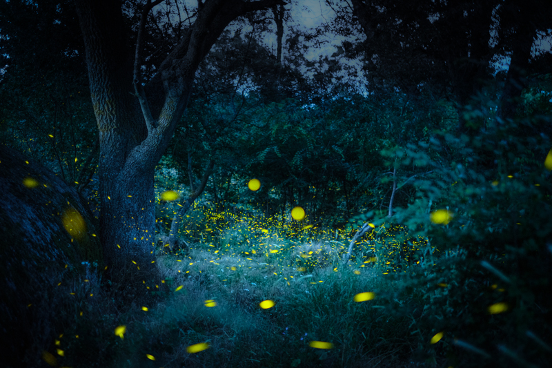 fireflies in Bulgaria
