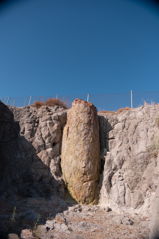 Petrified Forest Geopark in Lesbos