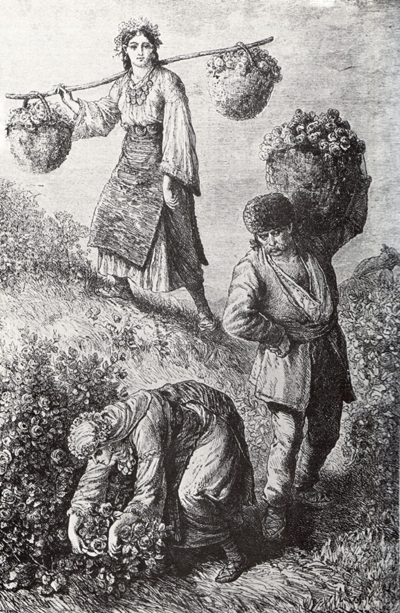 Rose picking near Kazanlak, an 1870's engraving by Felix Kanitz