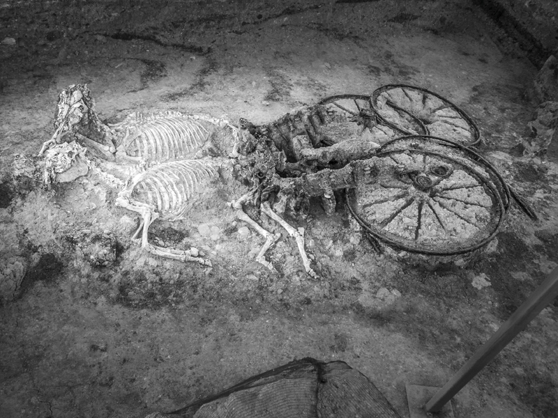 Harnessed horses were slaughtered to serve in eternity their dead Thracian master, who was buried in a mound near Karanovo, in the 1st Century AD