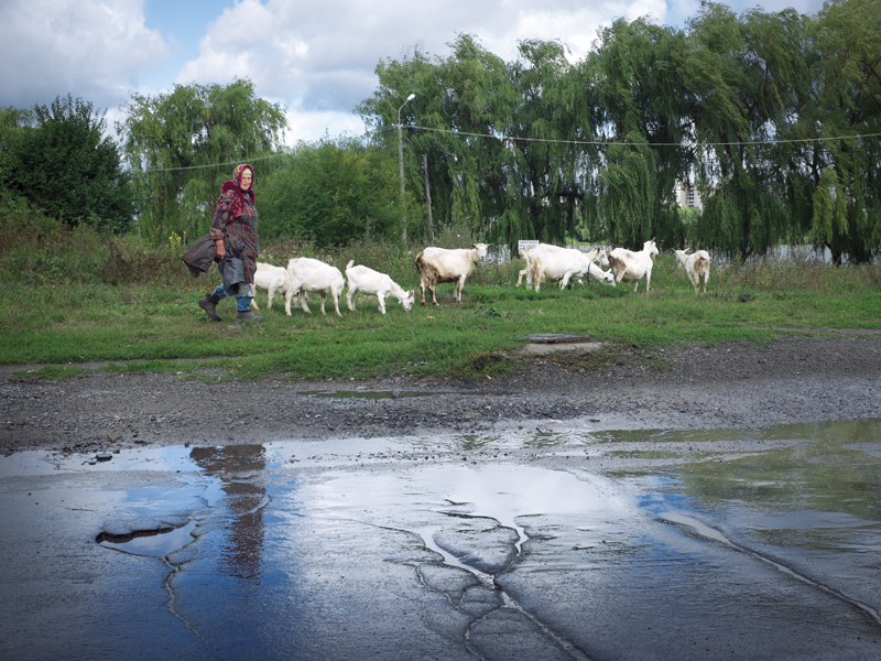 Goat herder on the outskirts of Vinnytsia