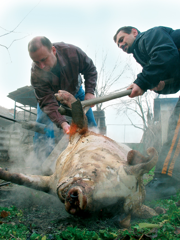 Killing a pig the Bulgarian way is a very unsightly procedure, definitely not for the fainthearted